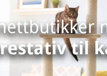 10 Bra nettbutikker med klorestativ til katt! (2019)