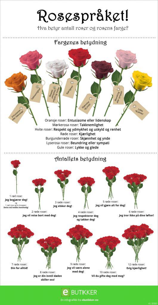 En komplett rosespråk oversikt! Hva betyr antall roser og rosens farge?