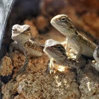 Reptil og Terrarie